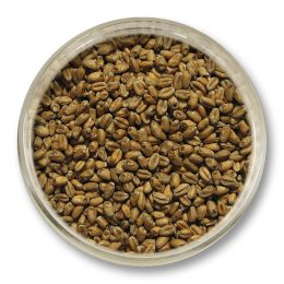 Smoked_Wheat_Malt
